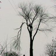 treehumper
