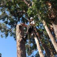 tree gaff vs pole gaff | The BuzzBoard