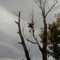 treeMasterninja