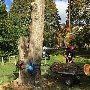 "Lowering an elm on to the ""Treegoat"", ground to soft and gate to small to take a tractor"