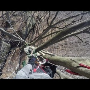 80' First Ascent in an Ancient Beech Tree - Recreational Tree Climbing