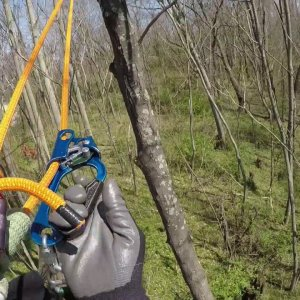 Tree climb & roundtrip traverse