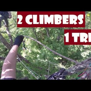 Two Climbers & One Tree_Recreational Tree Climbing
