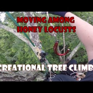 Moving Among Honey Locusts Traversing and Recreational Tree Climbing