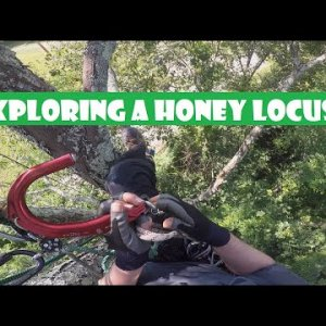 Exploring a Honey Locust & Swinging the Hook_Recreational Tree Climbing